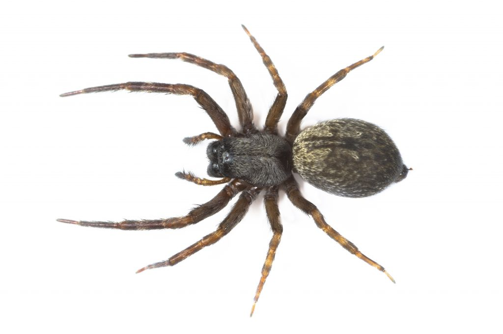 9 natural ways to keep spiders out of your home for How to stop spiders coming in your house