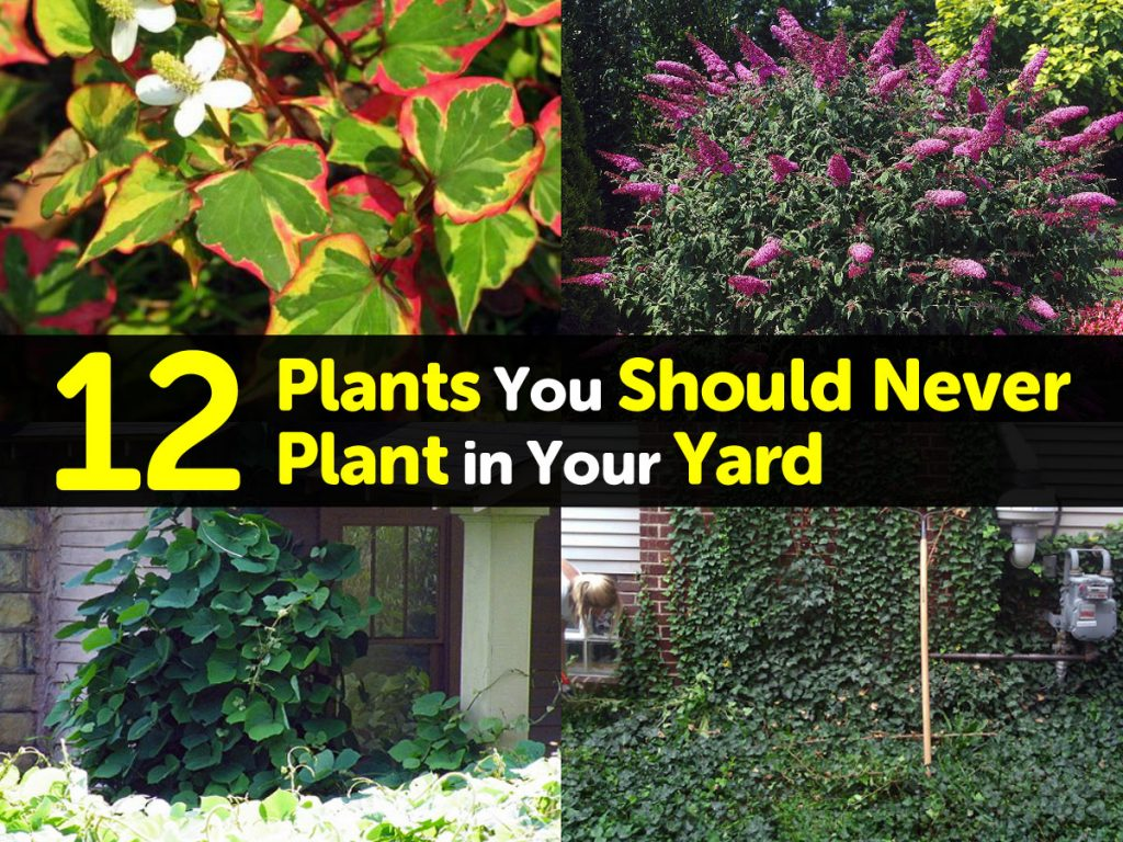 12 Plants You Should Never Plant in Your Yard