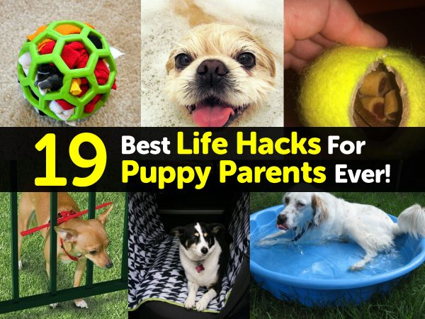 19 Best Life Hacks For Puppy Parents Ever!